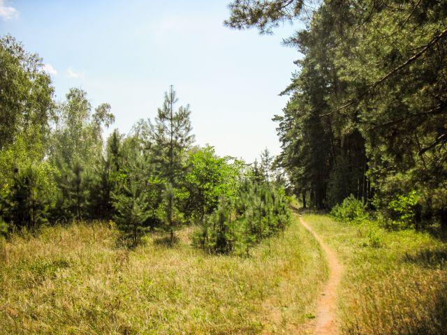 Пеший марафон - в лесу