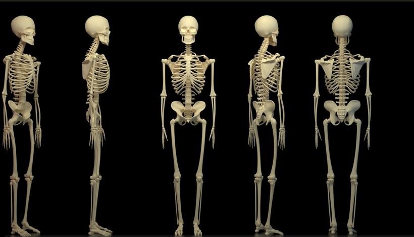 Для чего нужно знать анатомию обычному человеку, особенности скелета человека