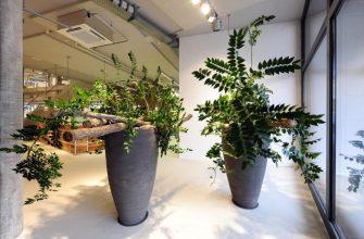 Как я вырастила в офисе 6 растений
